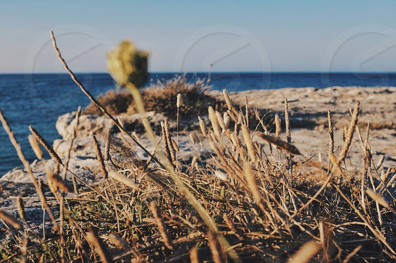 dried grass on rocky outcropping over water photo