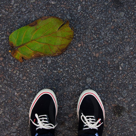 person wearing black sneakers standing in front of green leaf on asphalt photo