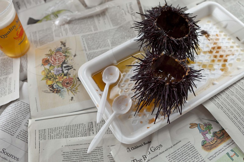 Sea urchin lunch at Quality Seafood in California. photo