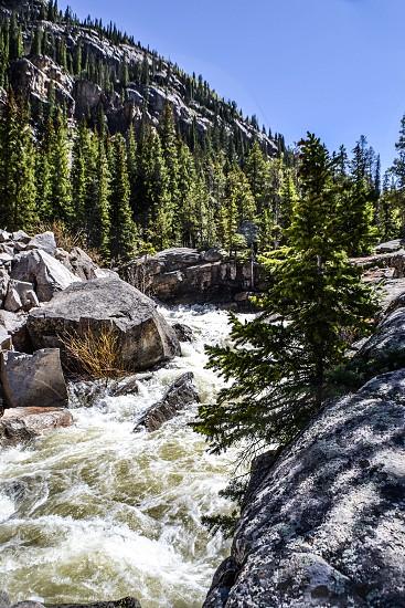 green pine tree and rocky mountain photo