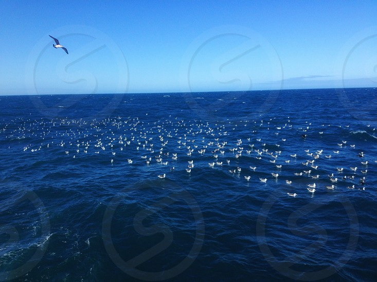 Sea travel  photo