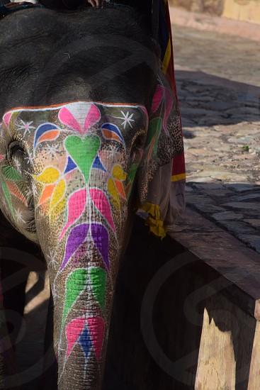An Elephant with heart photo