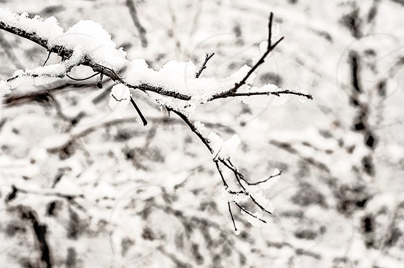 THE ABSTRACT | Not sure which is more intriguing the lonely branch the ice or the all the amazing branches in the background. photo