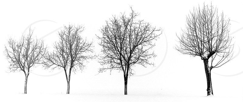 Snowy trees landscape  photo