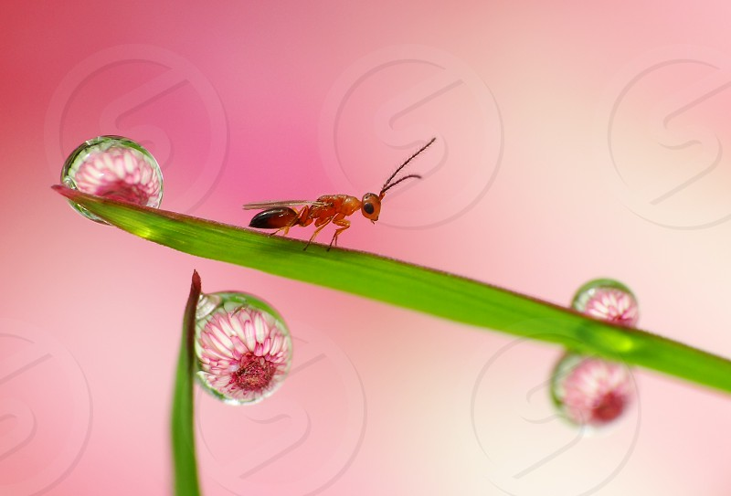 Happy bug landing on the grass. He is surrounded by dew drops photo