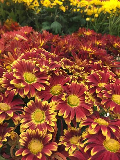 Krogers flowers photo