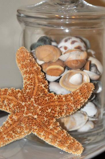 Seashells photo