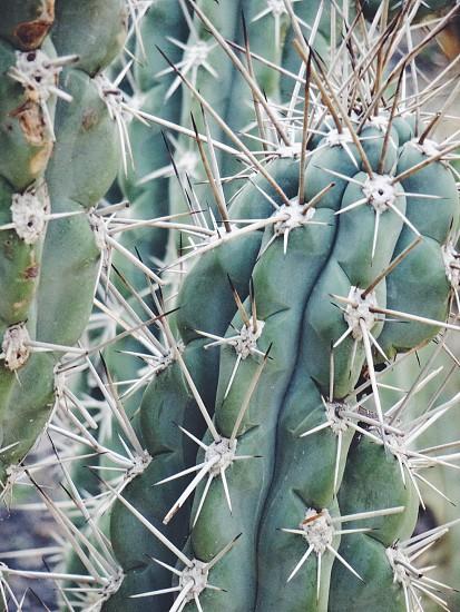green cactus plant photo