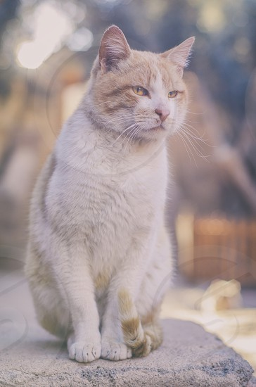 close up photography of white and brown medium fur cat photo
