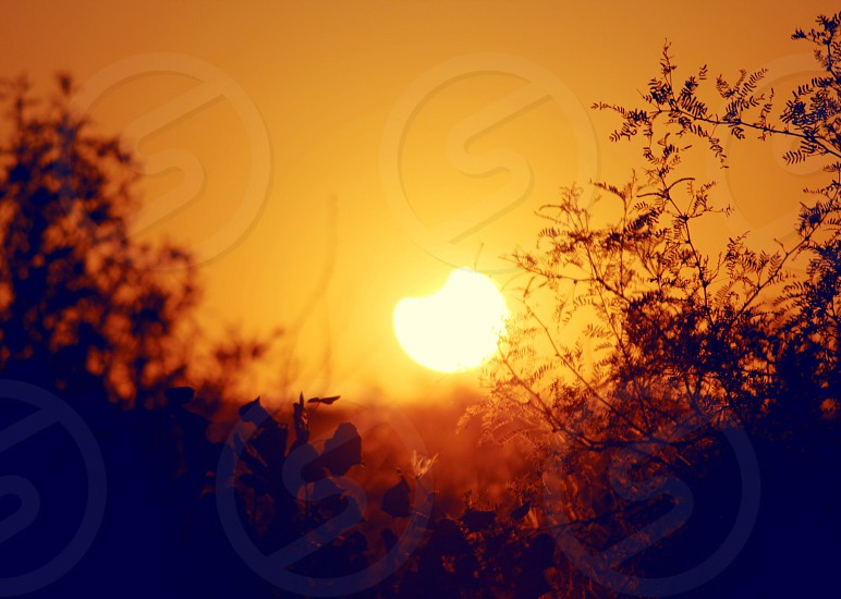 partial solar eclipse between trees at sunset photo