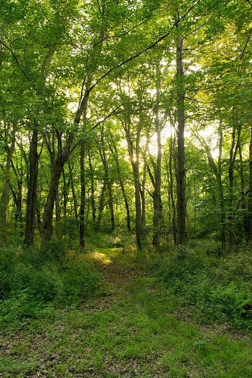 Path in the woods. photo