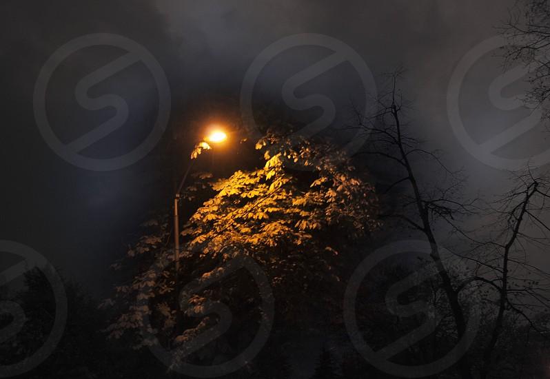 Dark wood with bright lights photo