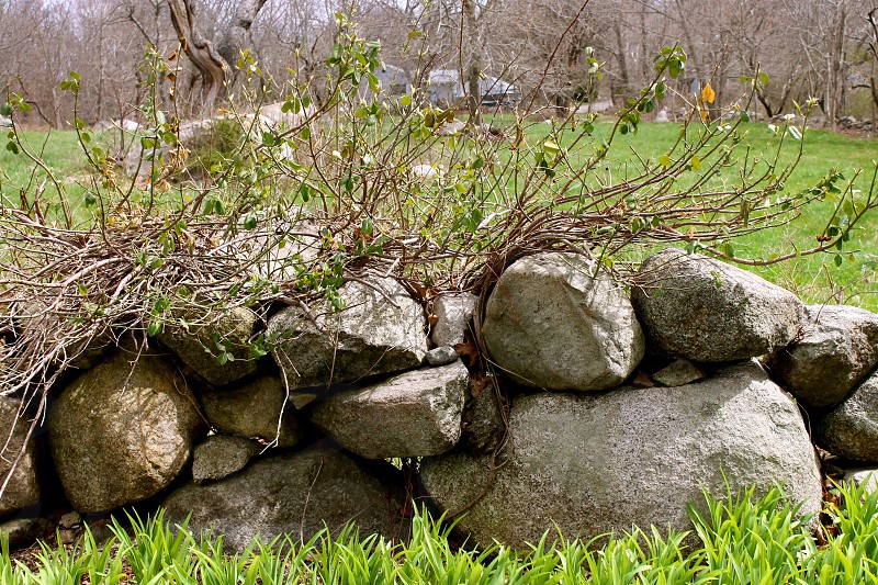 grey rocks on green grass photo