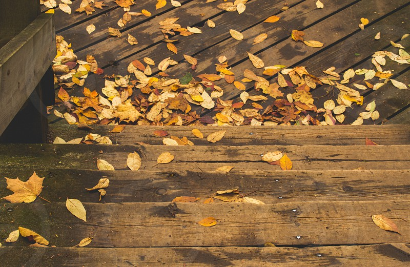 Fall leaves on wood stairs photo