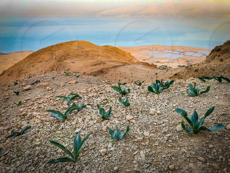 Desert Judea Plants Adventure travel hiking  photo