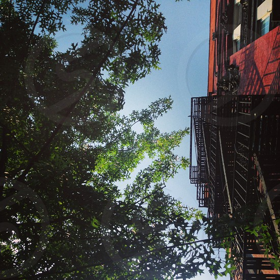 Summer New York City Brooklyn fire escape sky trees nature urban colors city.  photo