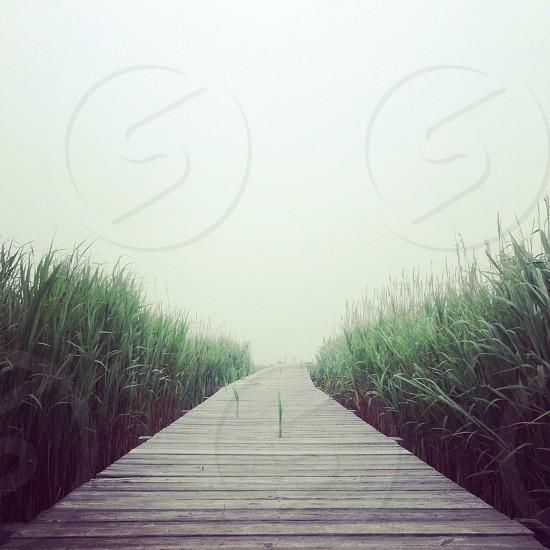 foggy pier photo