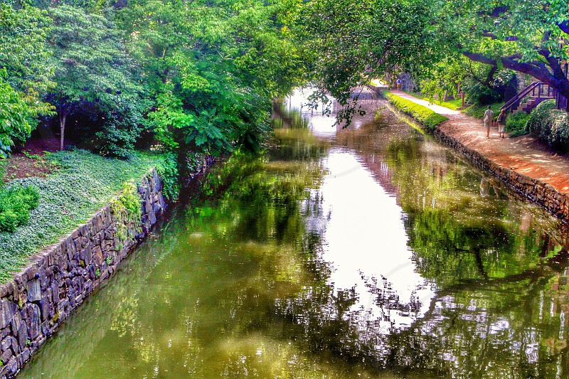 green tree near the pond photo
