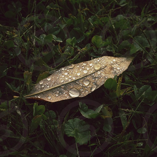 Leaf drenched with the morning dew photo