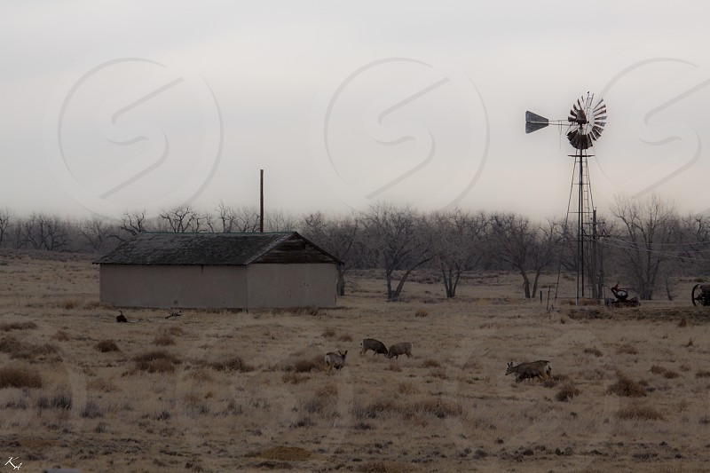 Barn Deer Denver Windmill grazing  photo