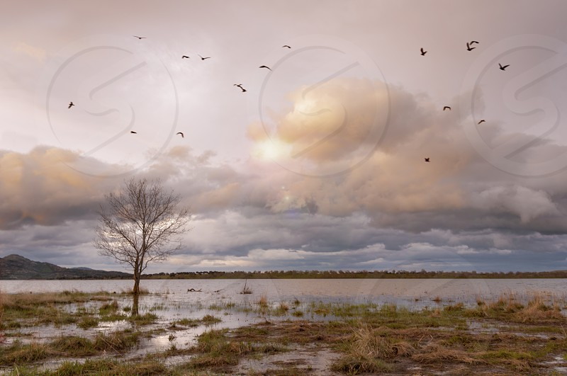 Lone tree on the lake Provides the gulls fly aatrdecer photo