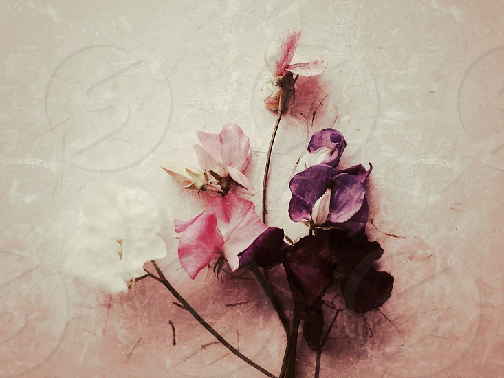 Sweet peas on a textured surface photo