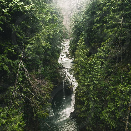 waterfall surrounded by green pine trees photo