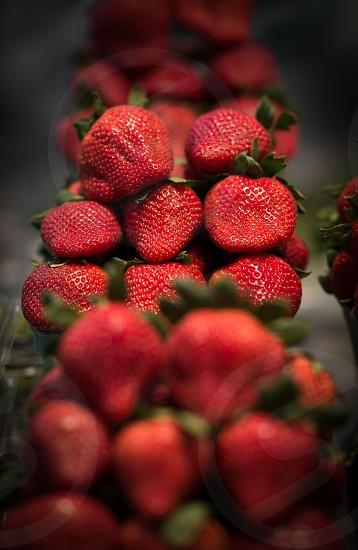 Going Organic photo