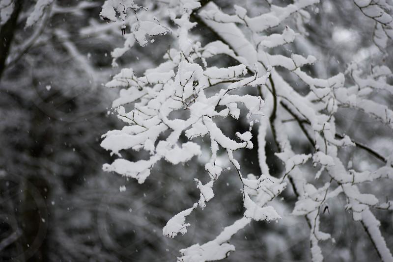 Minimal winter 4 photo