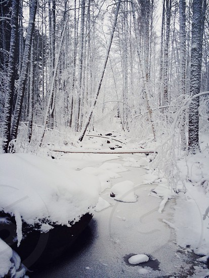 snow covered forest photo