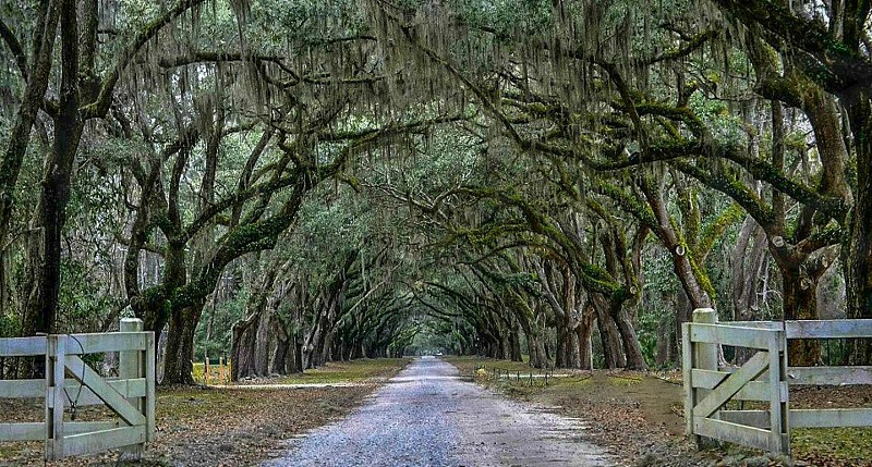 Wormsloe Plantation. Savannah GA photo