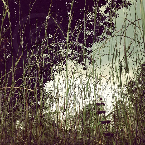 Weeds nature beauty muted  photo