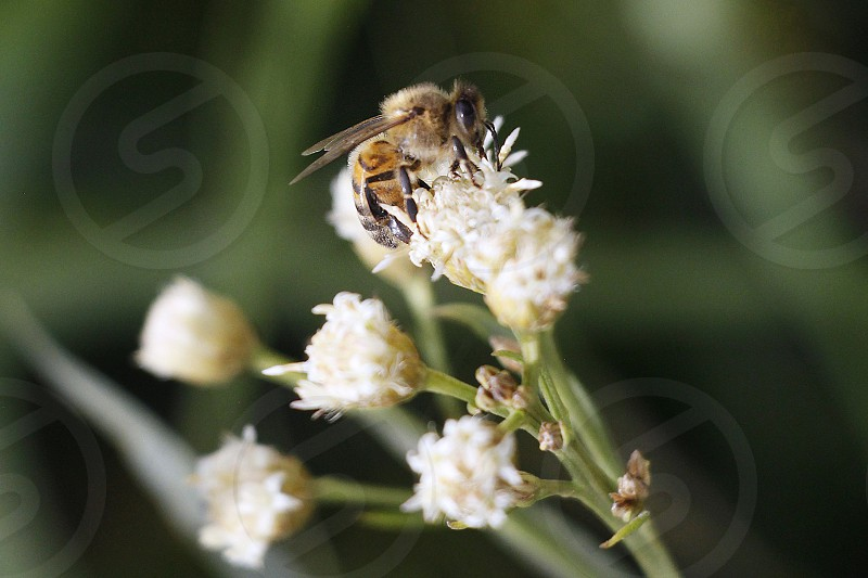 Bee insect green flower yellow  photo