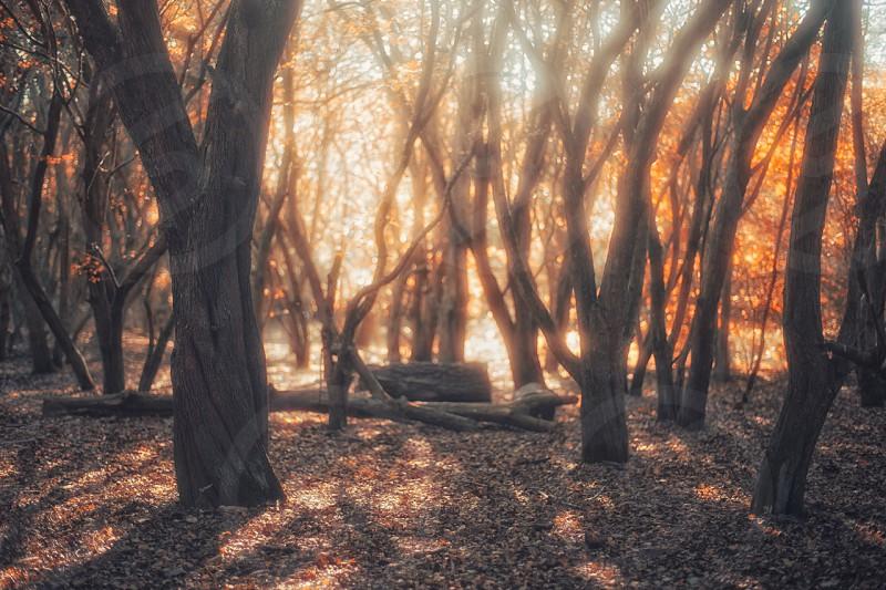 Autumn forest.  photo