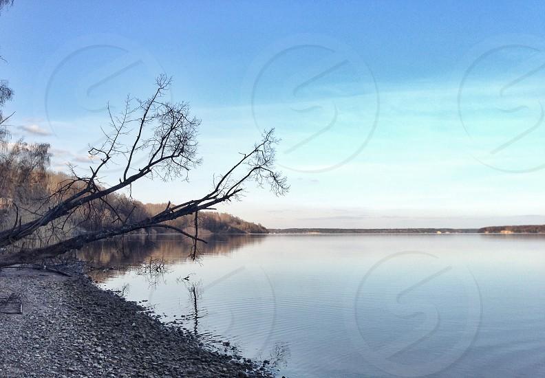 black leafless tree near lake  photo