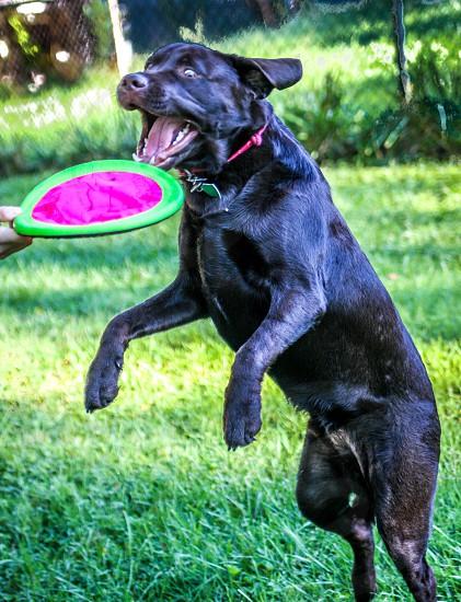Frisbee training... photo