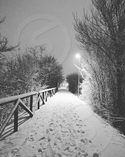 Let it snow photo