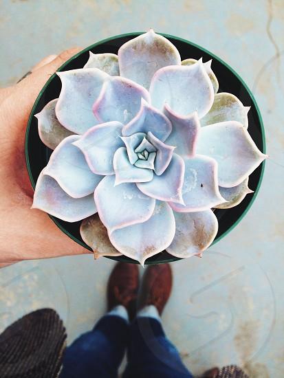 white flower in pot photo