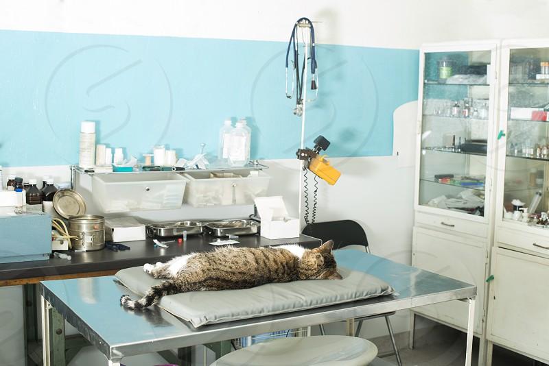 Cat anesthesia in veterinary. photo