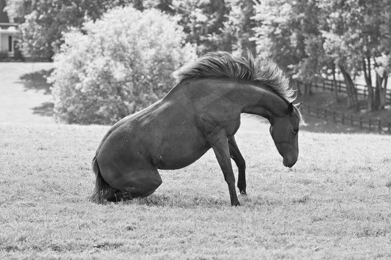 Horse rising I bet you have never ever seen this and I captured it for you.  photo