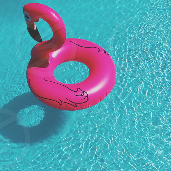 purple flamingo floater ring floating in water photo