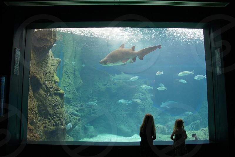 little girls watching a shark in a big aquarium photo