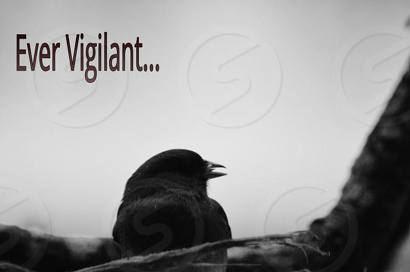 small bird perch on tree branch with ever vigilant label photo