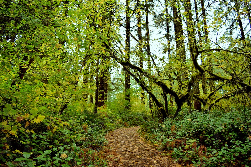Trail Silver Falls State Park Oregon pacific northwest mossy leafy trees photo