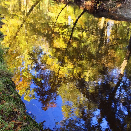 yellow trees water reflection photo