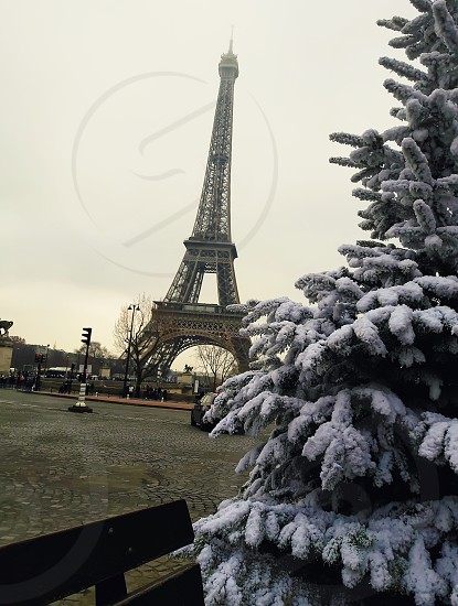 Snow covered fir branches christmas tree close up in front of Eiffel Tower in Paris France. photo