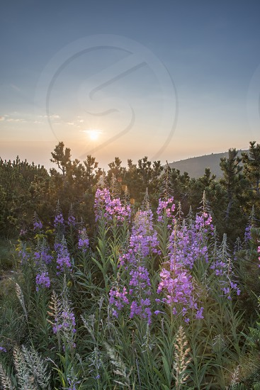 Sunrise in the mountain. Bulgaria Rila mountain photo