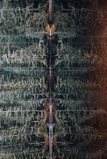 Reflections of the PNW trees. photo