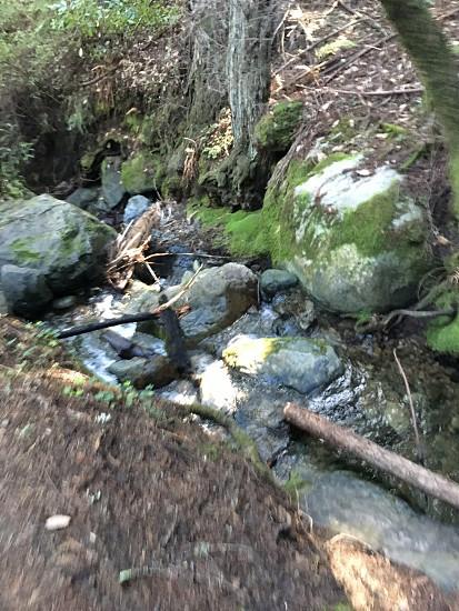 Miir woods  photo