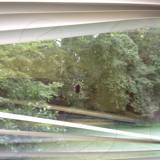 Spider; spiderweb; web; window; glass; blinds  photo